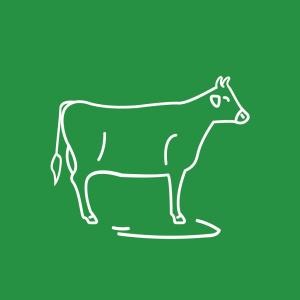 Milchvieh / Rinder